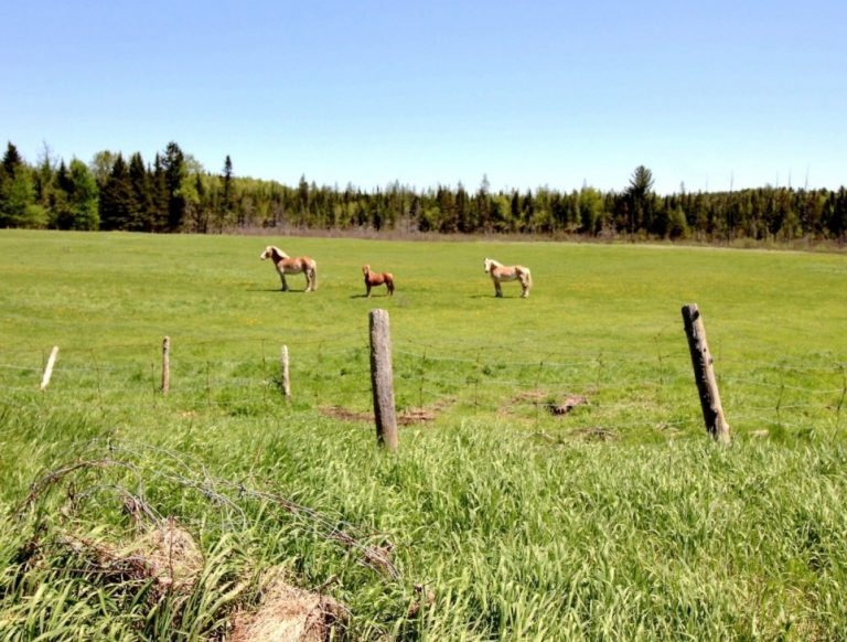 Terrain ferme chevaux